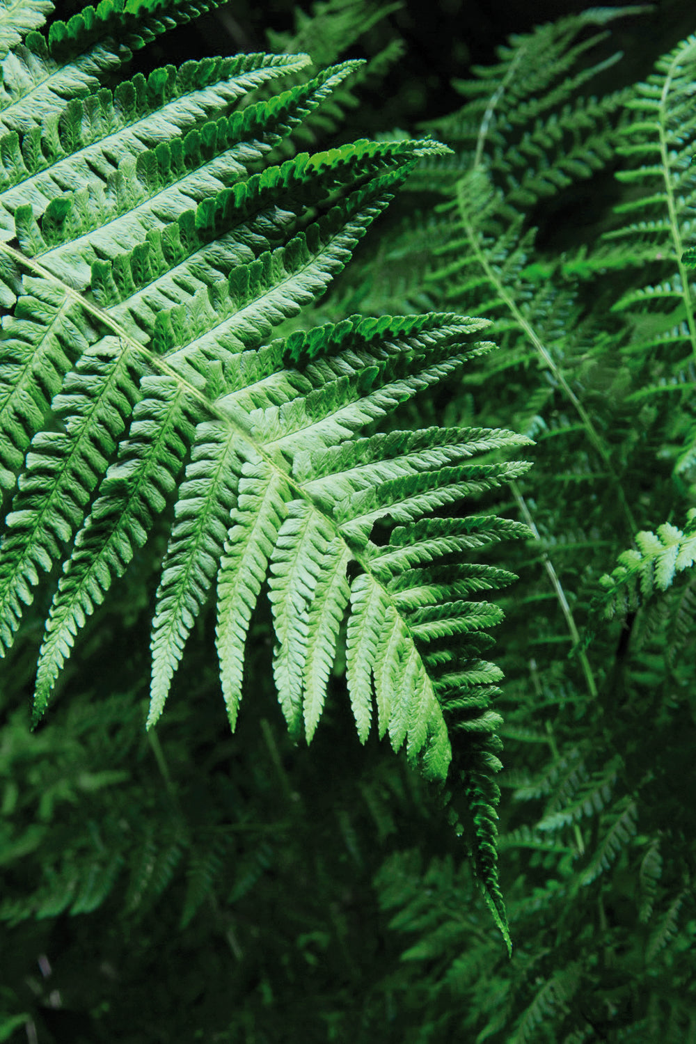 WHY FERN WILL BE THE NEW POWERHOUSE IN YOUR ROUTINE