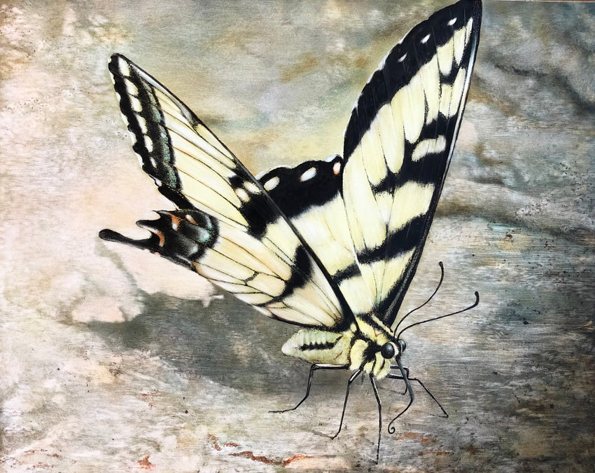 Alabama State Butterfly, Eastern Tiger Swallowtail
