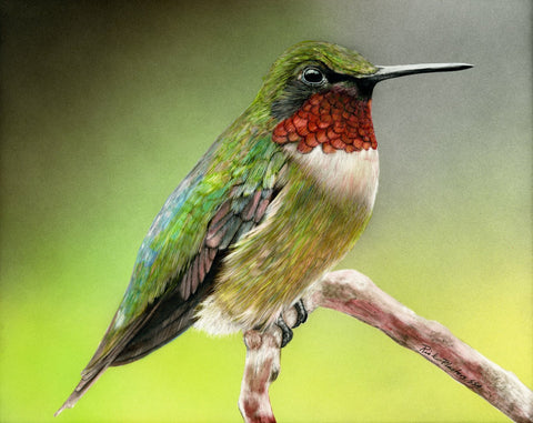 Ruby Throated Hummingbird, Clayboard drawing