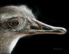 Ostrich drawing