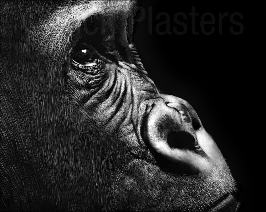 Gorilla stare drawing