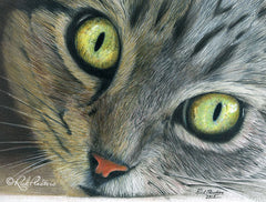 Colored pencil drawing of a Tabby Cat with big eyes.