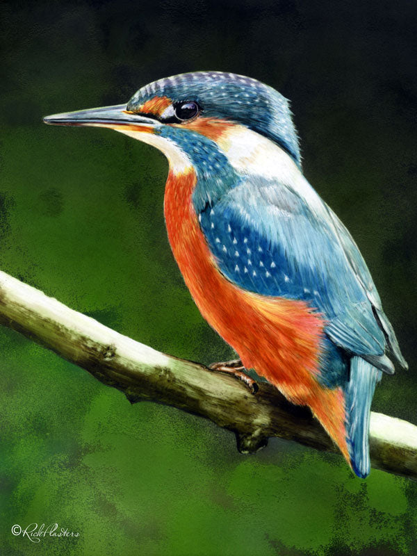 King Fisher Bird