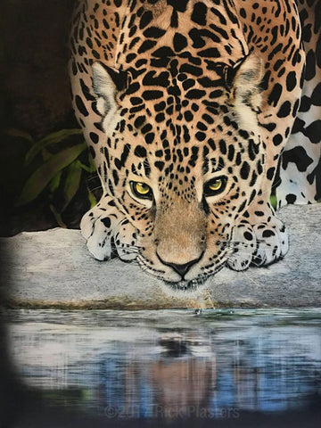 Birmingham Zoo Jaguar, Open Edition Print