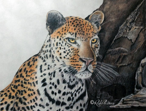 Glazing Eyes Leopard