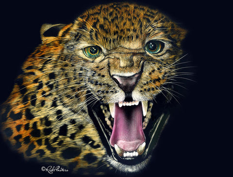 Wild One, Jaguar