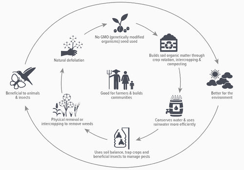 The Natural Cycle Of Organic Cotton