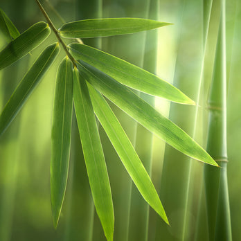 Close Up View Of A Bamboo Leaf And Plant
