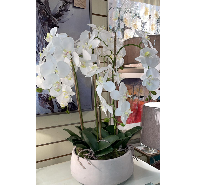 White Orchid in Pot 80cm