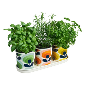 Three Herb Pots with Tray