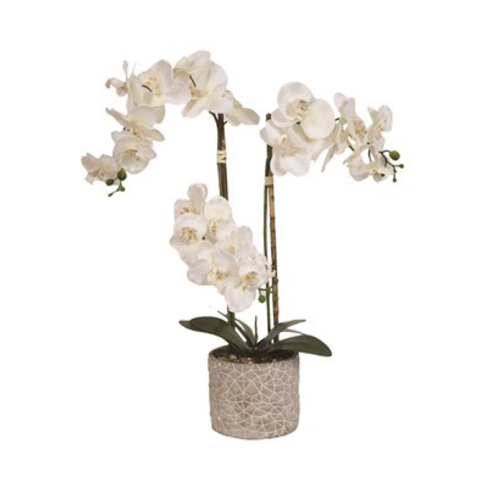 White Orchid in Round Pot 68.5cm