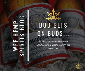 Budweiser Manufacturer Announces Major Cannabis Investment