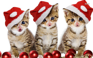 Christmas Cat Diamond Painting Kit - DIY