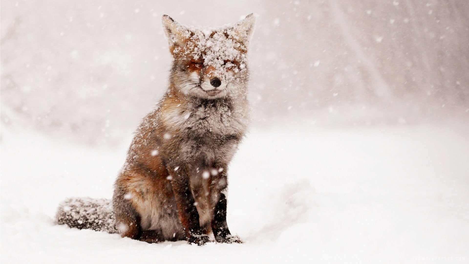 Fox In The Snow Diamond Painting Kit - DIY