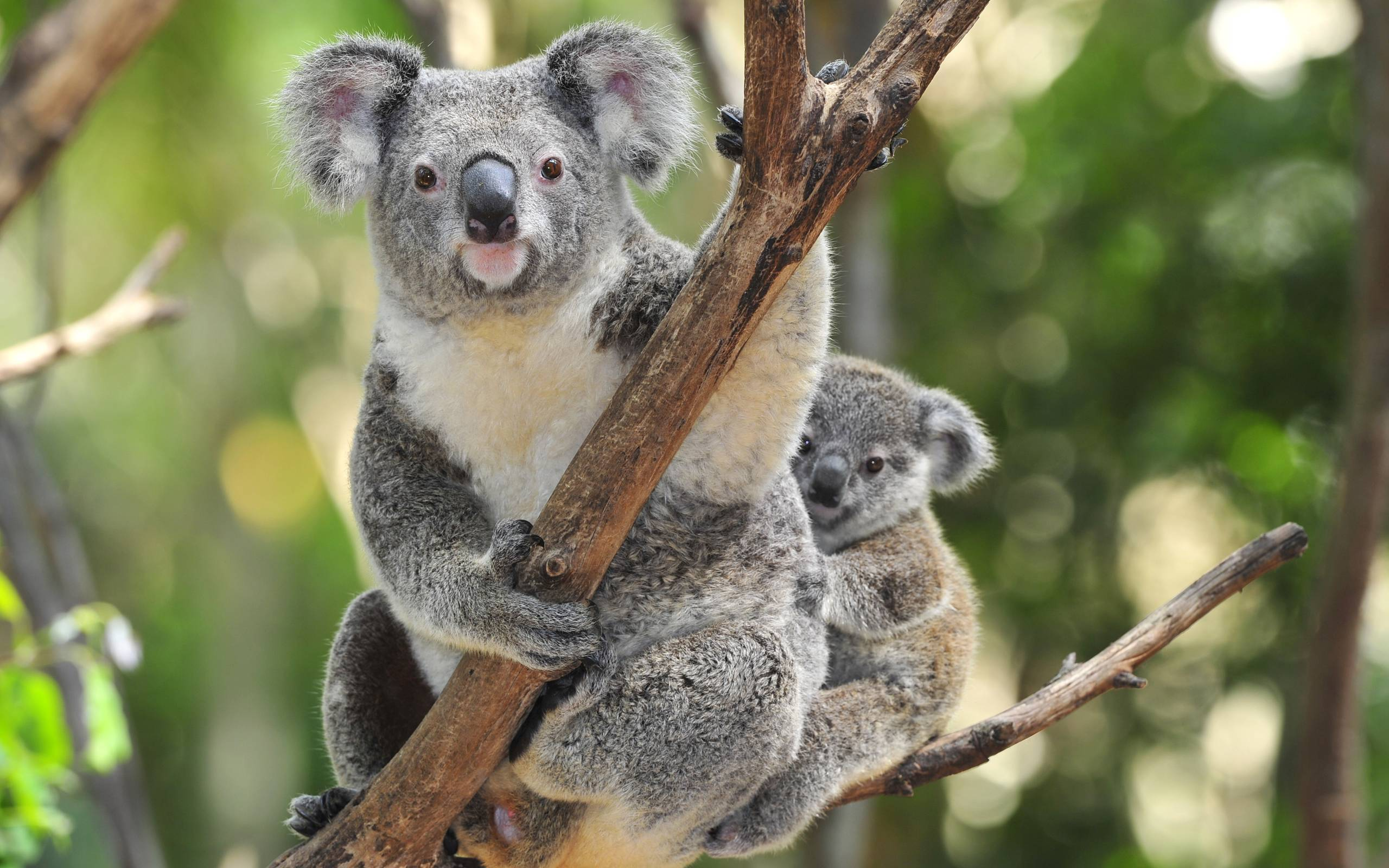 Koala Mom Diamond Painting Kit - DIY