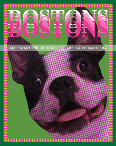 "BOSTONS! Boston Terrier Pop Art, 8""x10"" metallic print"
