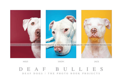 Deaf Bullies - Limited Edition Collage Print