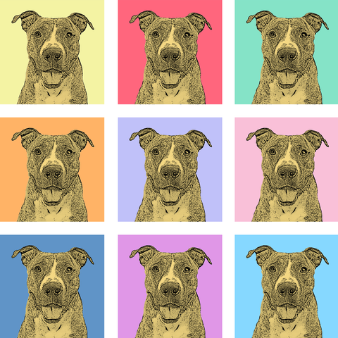 Get a Pop Art Portrait Made of Your Pet - 9-image collage on one print