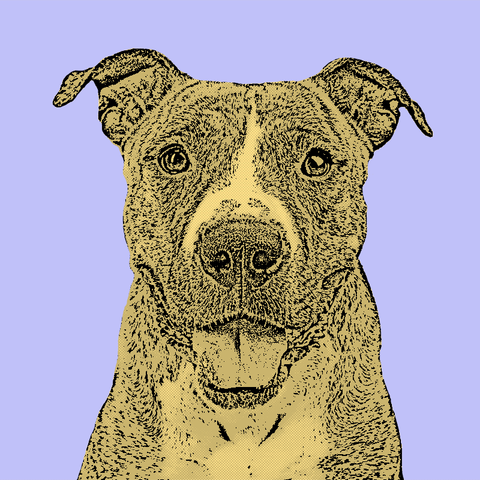 Get a Pop Art Portrait Made of Your Pet - Single Image 5x5