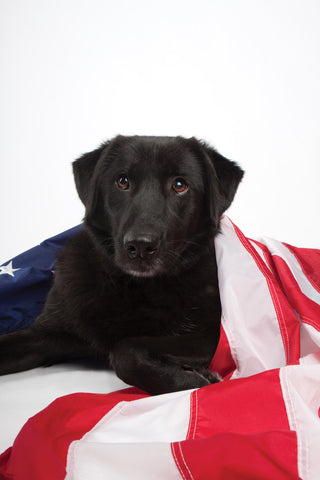 Sadie with U.S. Flag (open edition print)