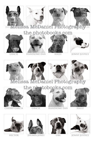Vick Dog Collage (10 dogs) - Limited Edition Print