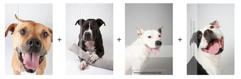 Portrait Print Pack: Vick Dog Portraits (BAD RAP) (4 prints)