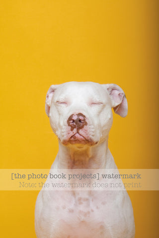 """Dogs of the Photo Books"" Print Series: Jack, Deaf Dogs"