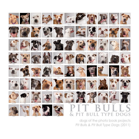 "Pit Bull Collage Print - 8""x8"" (color)"