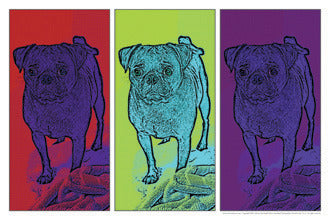 Three Pugs pop art poster