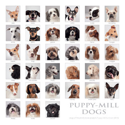 "Puppy-Mill Dogs Collage Print - 8""x8"" (color)"