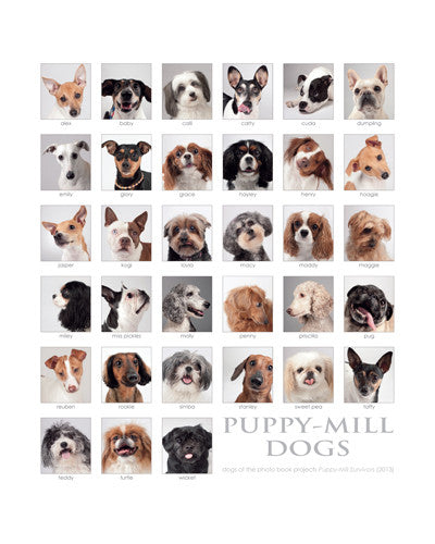 "Puppy-Mill Dogs Collage Print - 16""x20"" (color or b&w)"