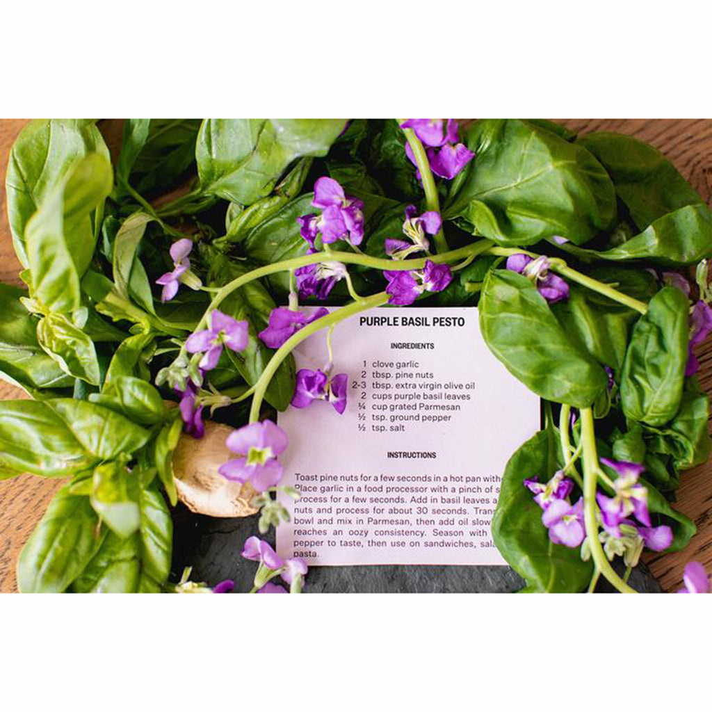 apotheke purple basil market collection scented soy candle included recipe