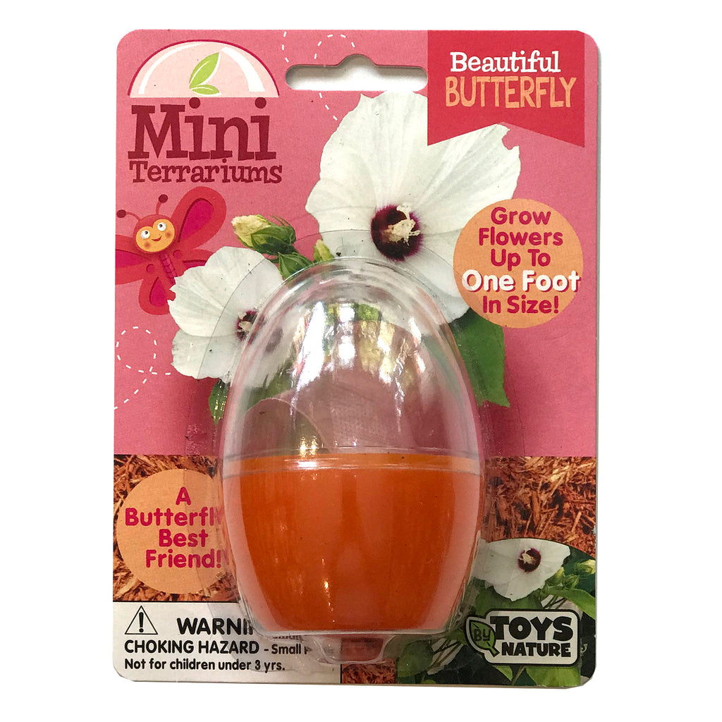 continuum games beautiful butterfly mini terrarium grow kit