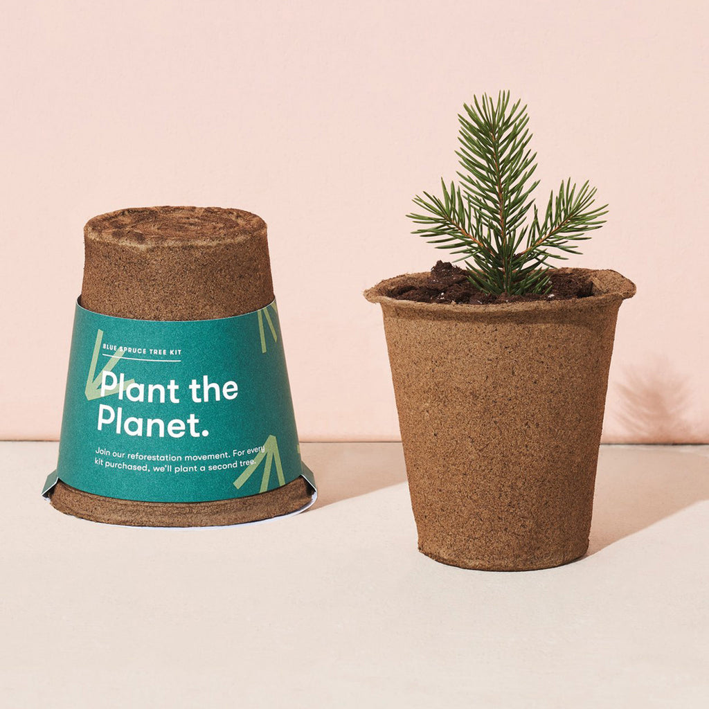 modern sprout one for one tree indoor seed starter kit blue spruce tree in packaging with sprout in pot
