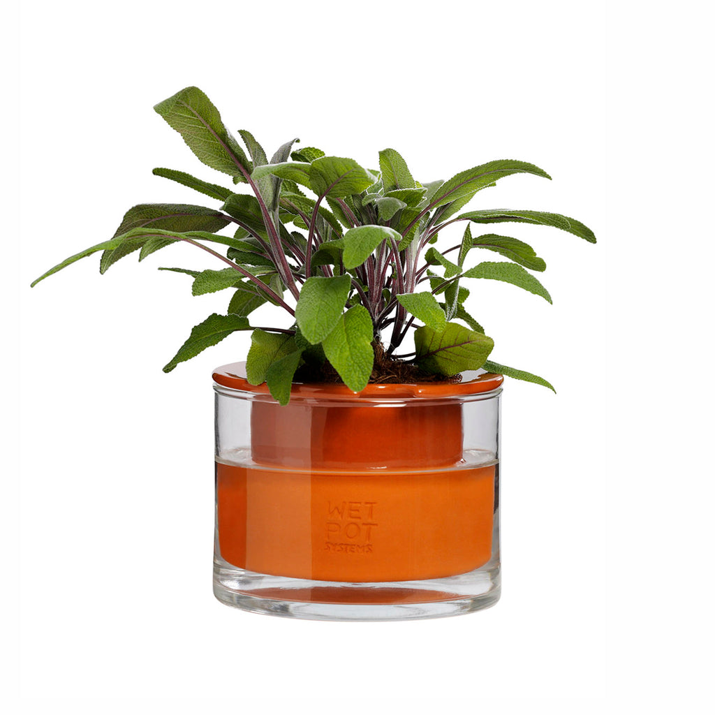 moma wet pot systems extra small indoor self watering planter pot