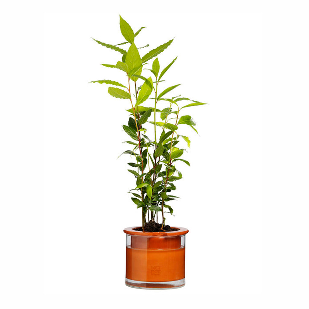 moma wet pot systems small indoor self watering planter pot with tall plant