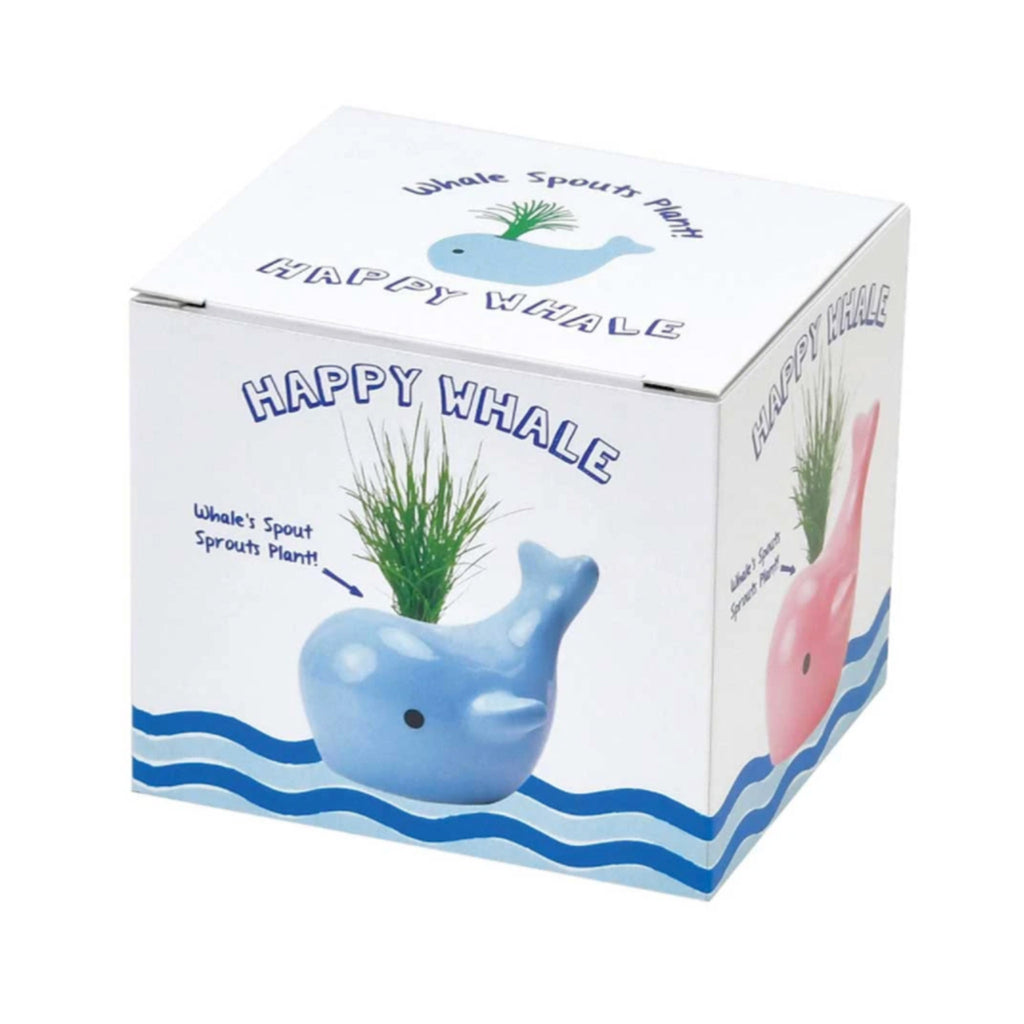 noted happy whale blue ceramic planter grass indoor garden grow kit box