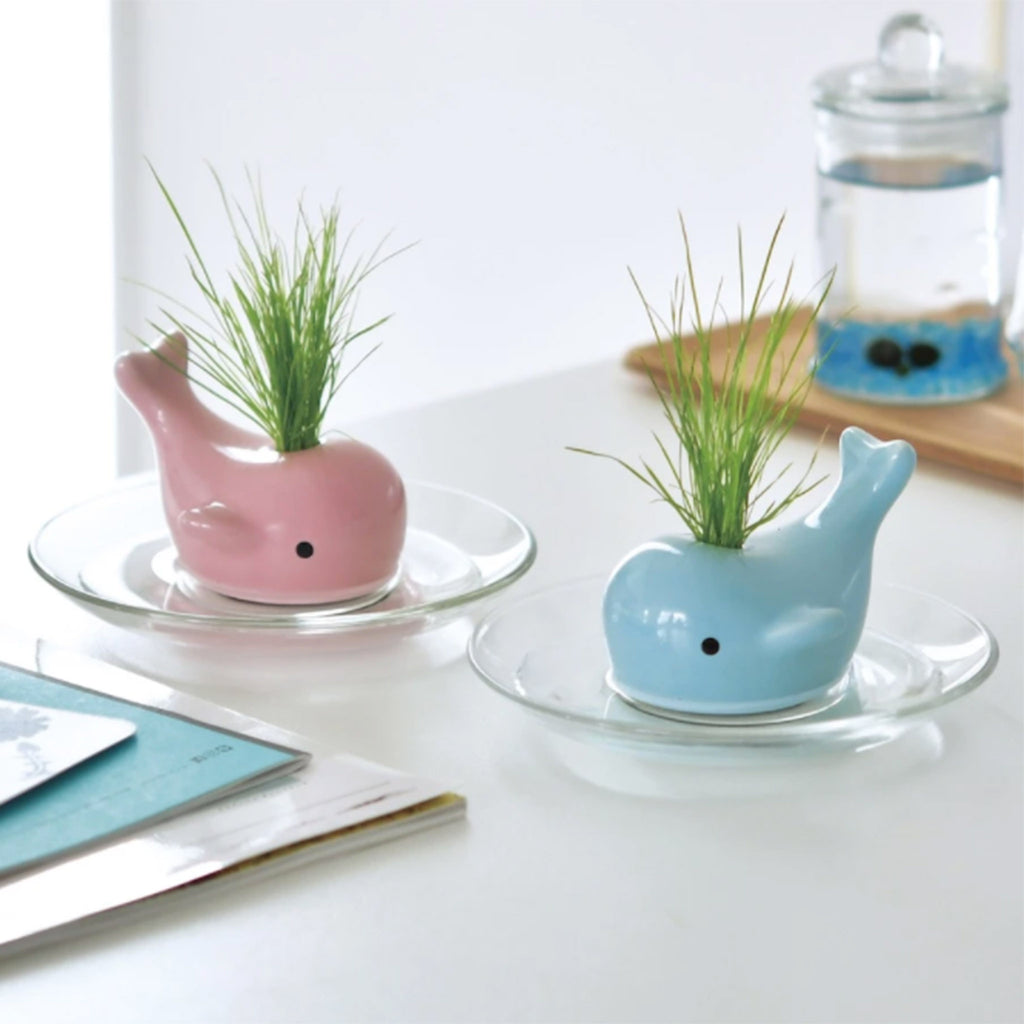 noted happy whale blue ceramic planter grass indoor garden grow kit in home setting