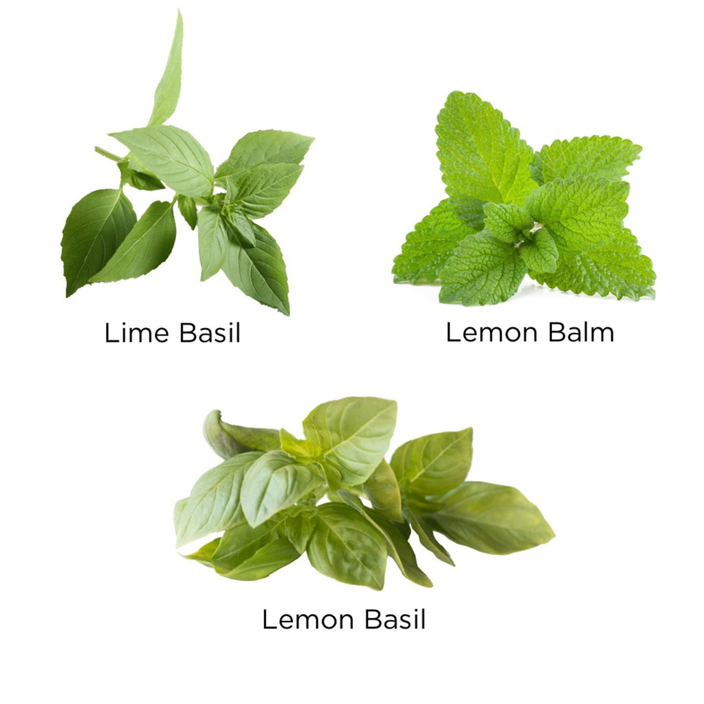 urban leaf hint of citrus window bottle garden indoor grow kit plant varieties included