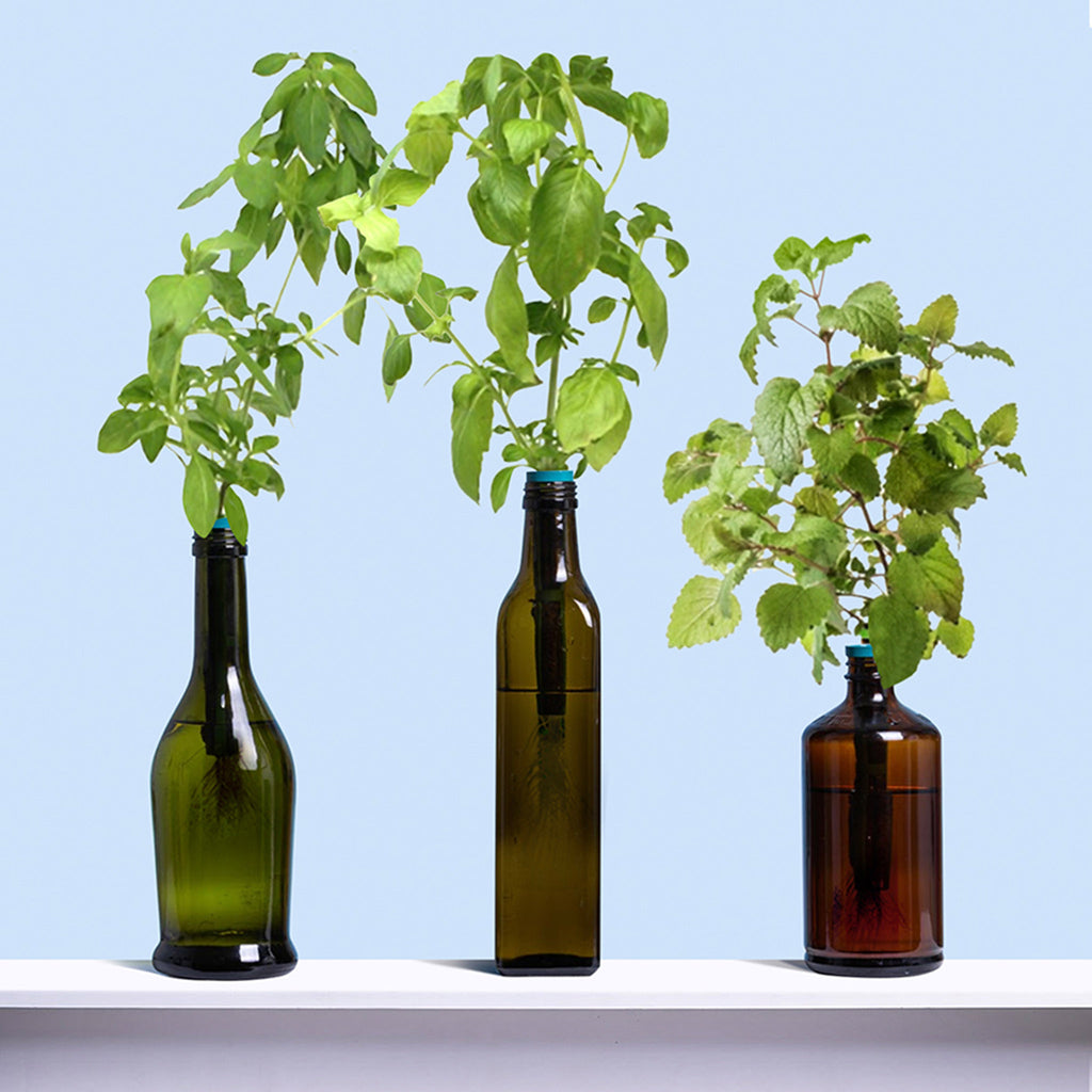 urban leaf hint of citrus window bottle garden indoor grow kit grown plants in bottles