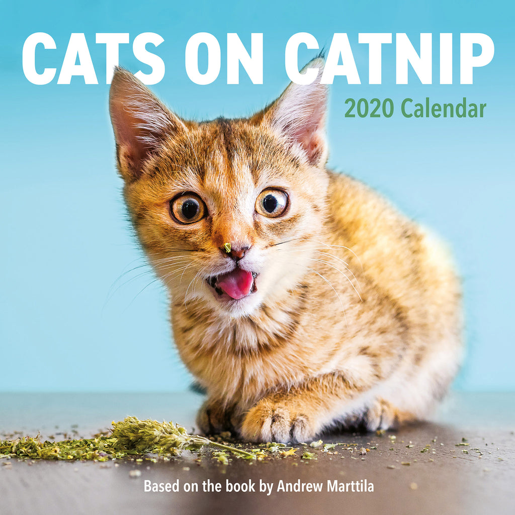 workman 2020 cats on catnip hanging monthly wall calendar cover 9781523507450