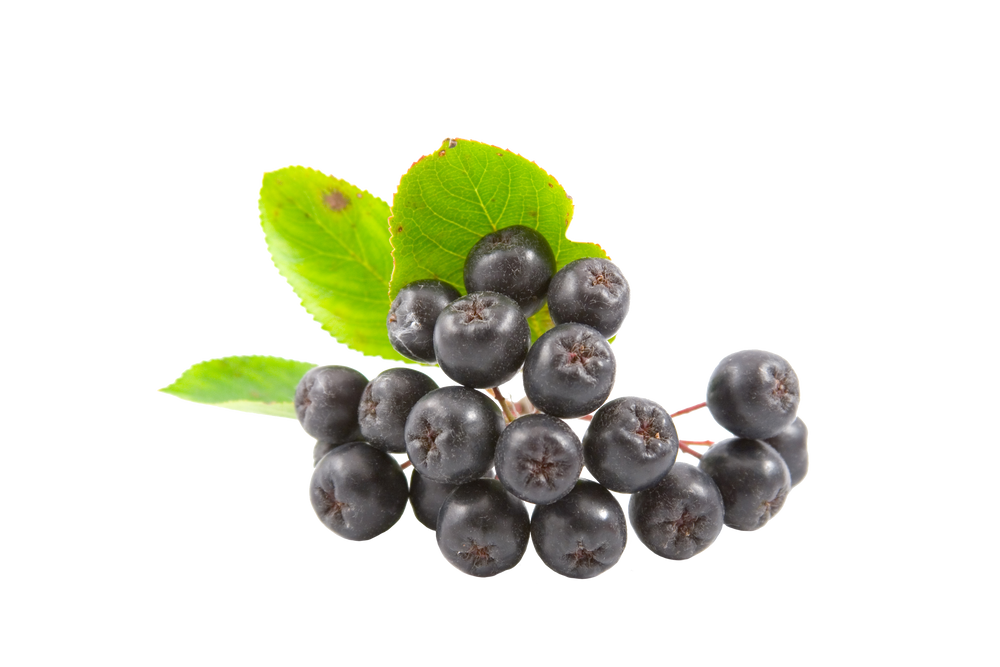 Aronia Shown to Reduce LDL Cholesterol