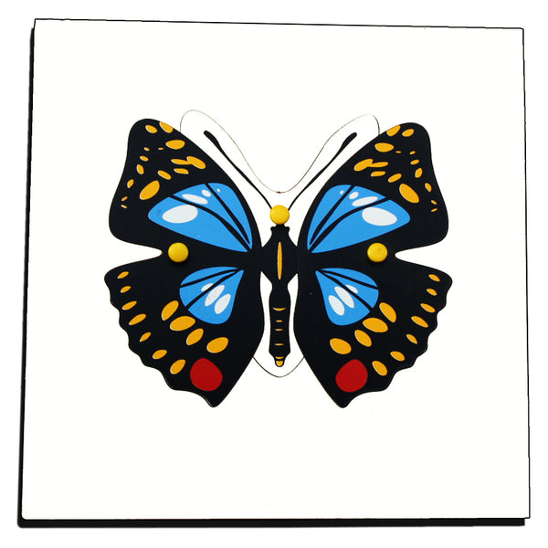 Botany Puzzles with Cabinet - Lifecycle of a Butterfly