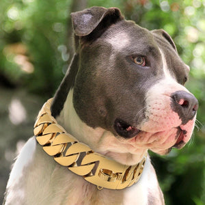 Big Dawg Smooth Cuban Link Dog Collar