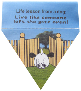 Life lesson from a dog: live like someone left the gate open