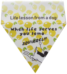 Life lesson from a dog: When life serves you lemo...Squirrel!