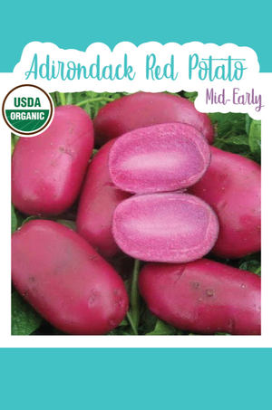 Organic Adirondack Red Seed Potato (Mid-Early)