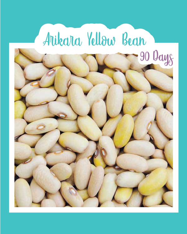 Arikara Yellow Bush Bean