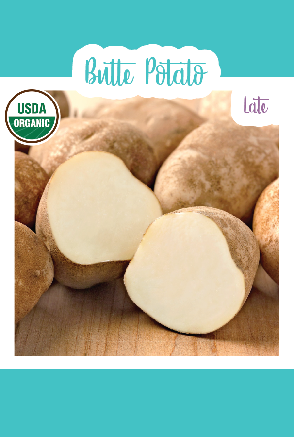 1 lb. Organic Butte Seed Potatoes (Late)