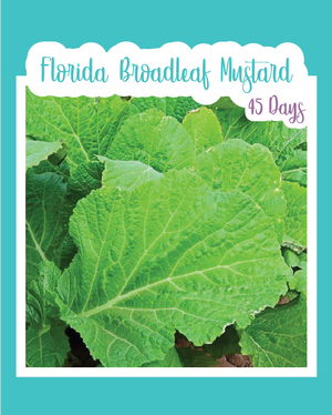 Florida Broadleaf Mustards Microgreens